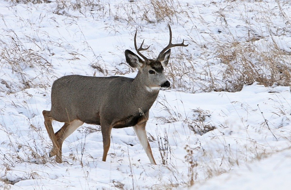 Back 40 Deer Hunting Tips